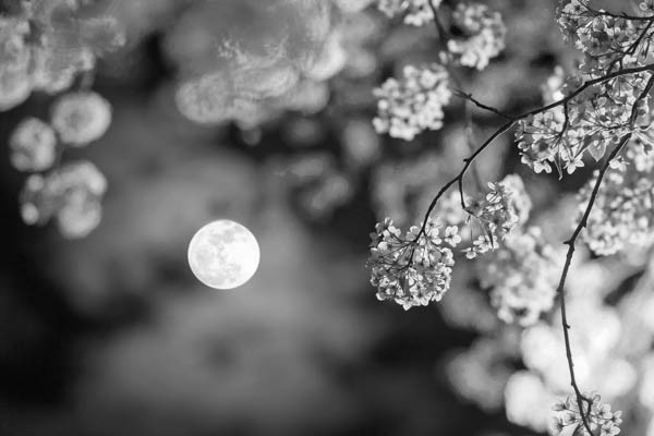 Die Wirkung des Mondes bleibt geheimnisvoll